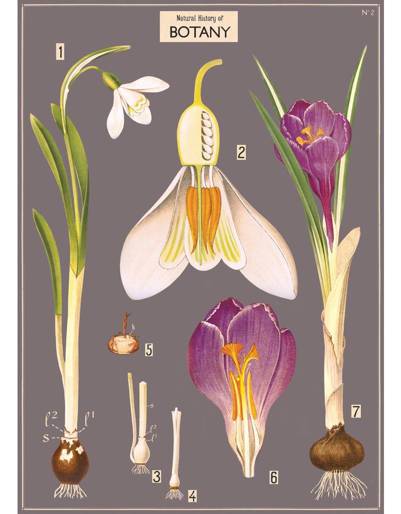 Cavallini Wrap Sheet Natural History Botany