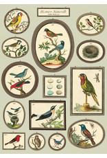 Cavallini Wrap Sheet Natural History Birds 2