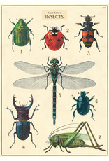 Cavallini Wrap Sheet Natural History Insects 2