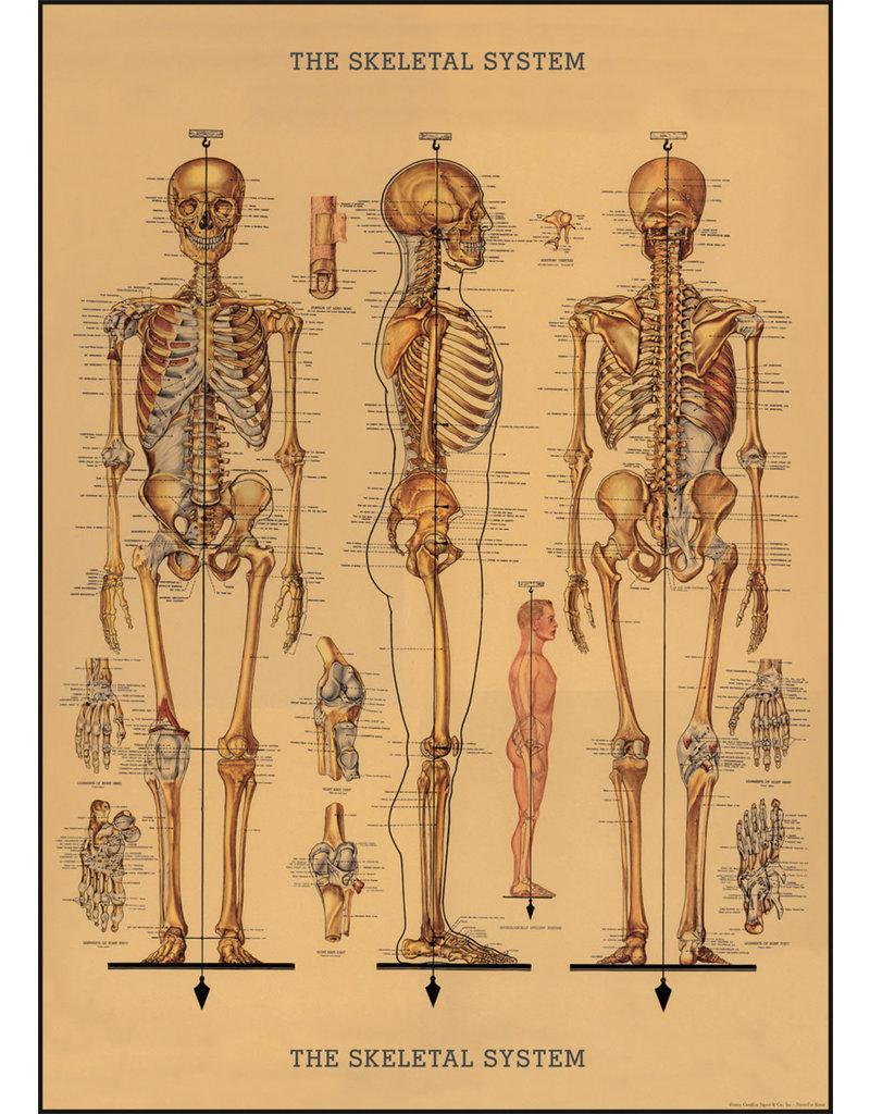 Cavallini Wrap Sheet Skeleton