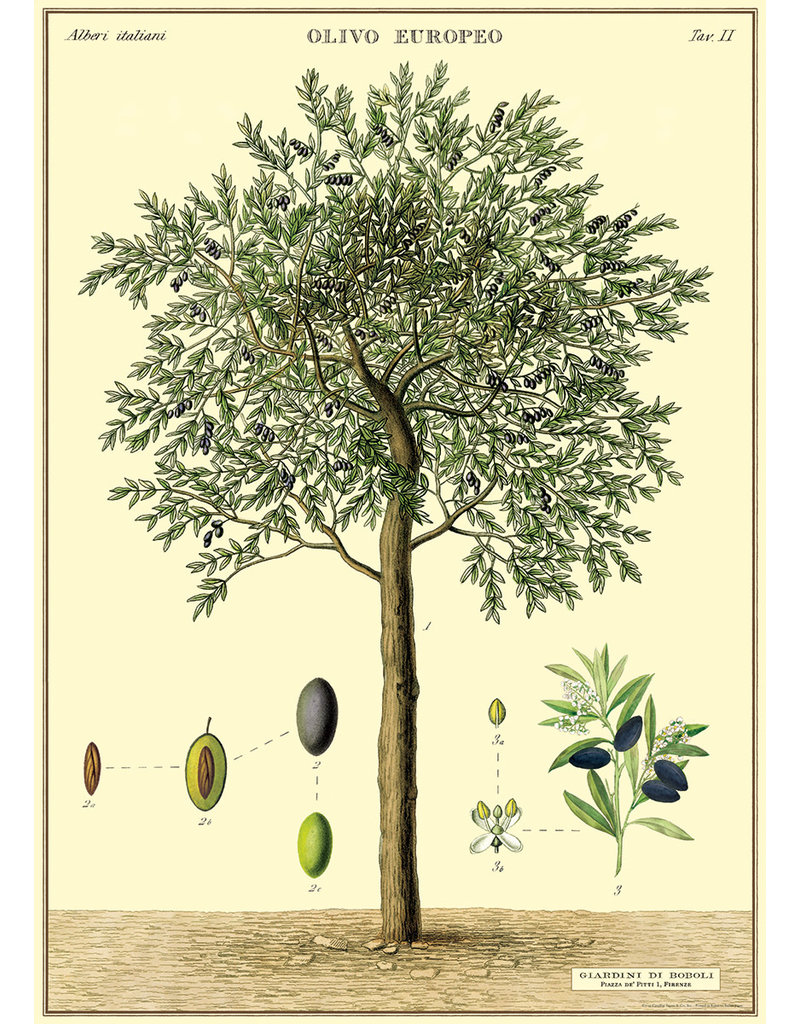 Cavallini Wrap Sheet Olive Tree