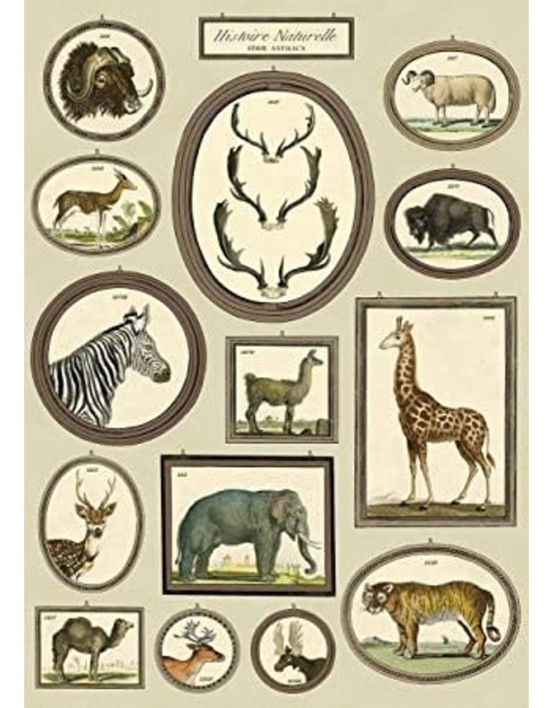 Cavallini Wrap Sheet Natural History Animals