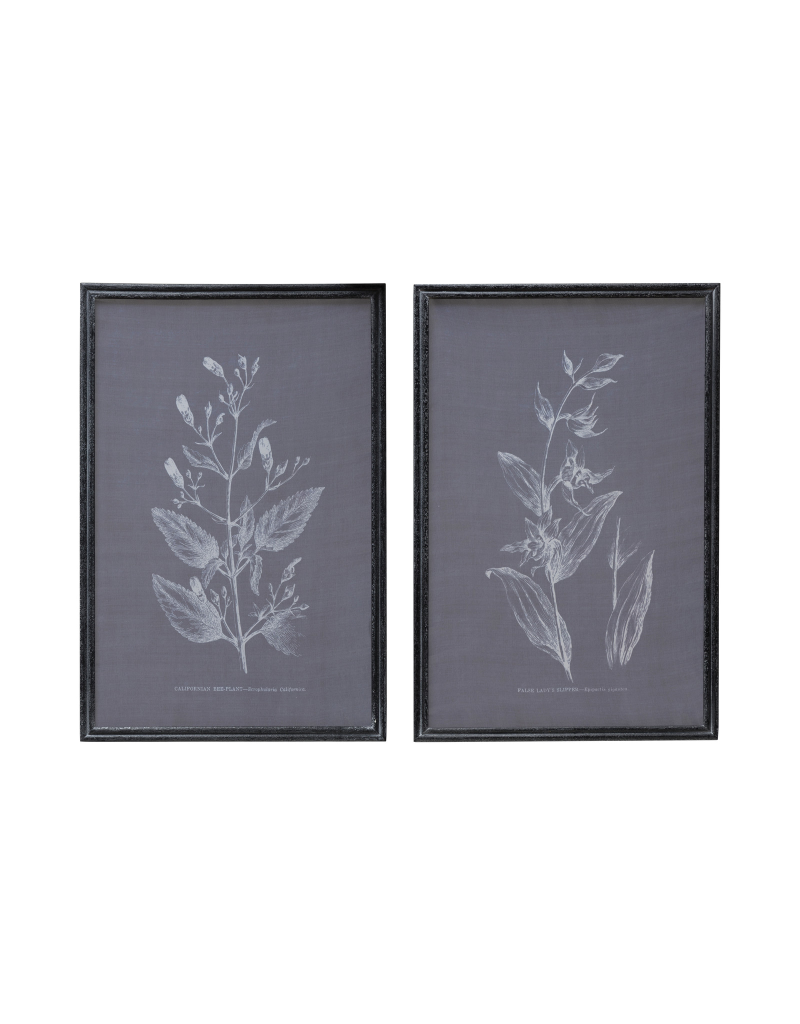 Botanical on Transparent Silk Screen Wall Décor with Wood Frame (Set of 2 Styles)