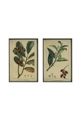 Vintage Reproduction Botanical Print with Black Metal Frame (Set of 2 Styles)