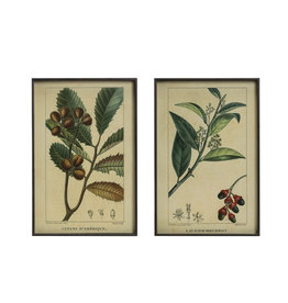 Vintage Reproduction Botanical Print with Black Metal Frame (Set of 2 Styles)