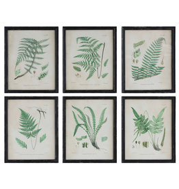 Fern Reproduction Images in Wood Frames (Set of 6 Designs)