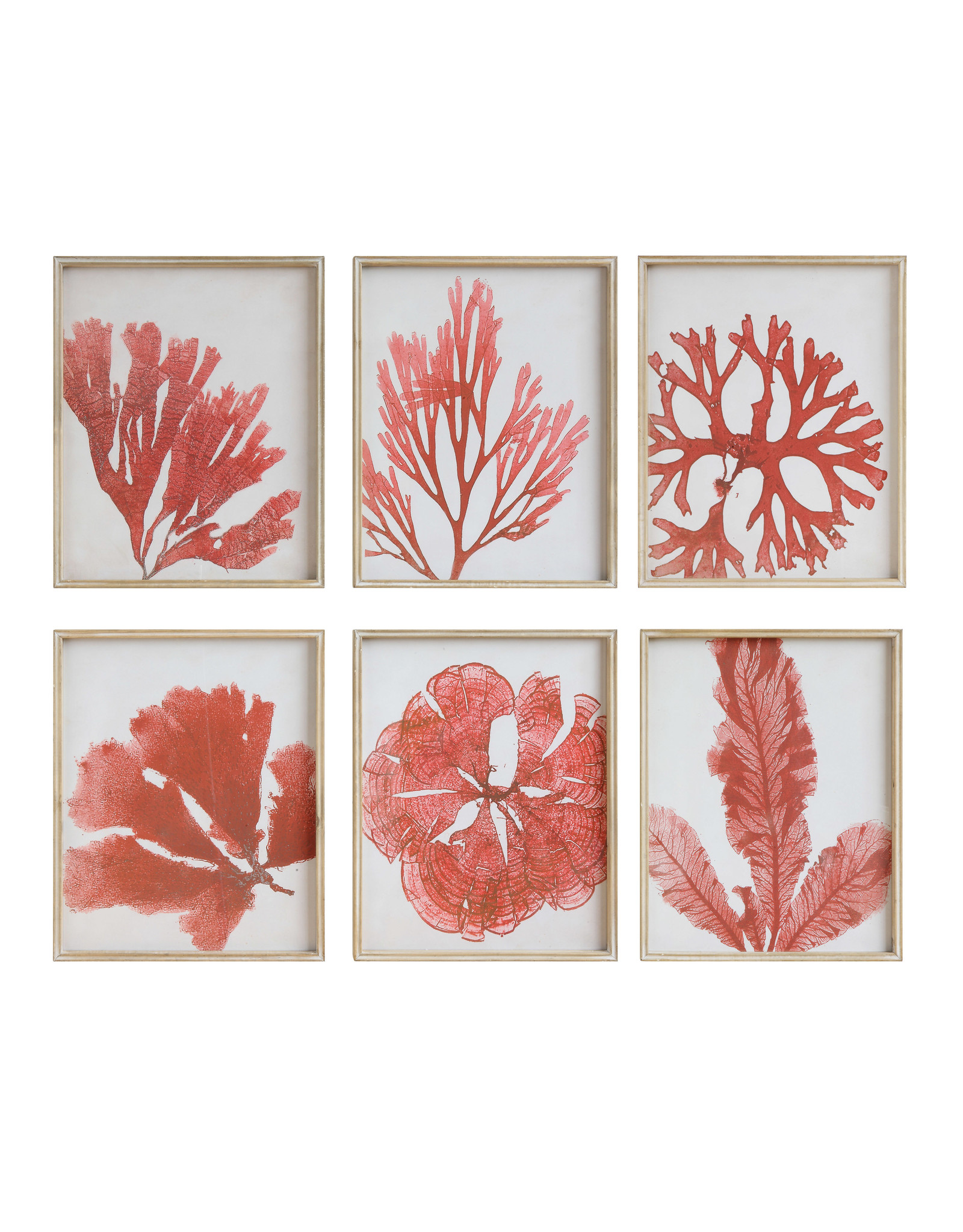 Coral Image Wall Décor with Wood Frame (Set of 6 Designs)