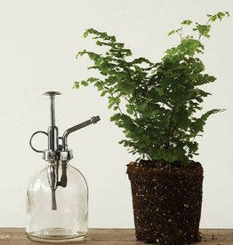 Glass Bottle Plant Mister