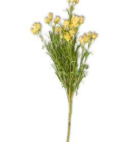 Yellow Wildflower Stem