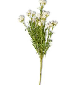 White Wildflower Stem
