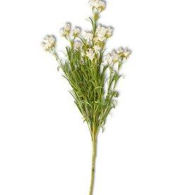 White Wildflower Stem
