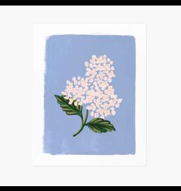 Rifle Paper Co. Hydrangea Bloom Blue Art Print 8x10