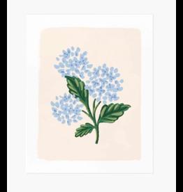 Rifle Paper Co. Hydrangea Bloom Cream Art Print 8x10
