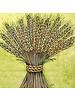 Boston International Harvest Wheat Napkins
