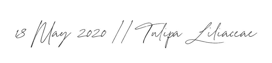 DATE//LATIN NAME