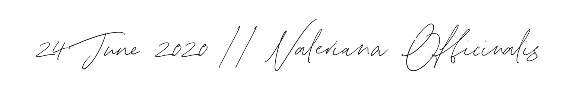 24 June 2020 // Valariana officinalis