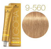 9-560 Extra Light Blonde Gold Chocolate 60g - Igora Royal Absolutes by Schwarzkopf