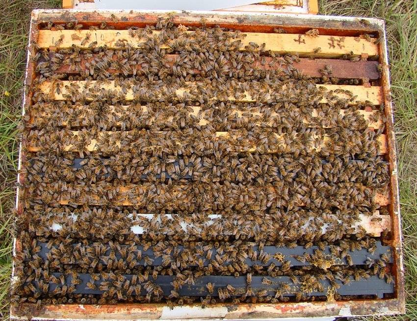 Single Hive with Used Equipment FRIDAY Pick-Up