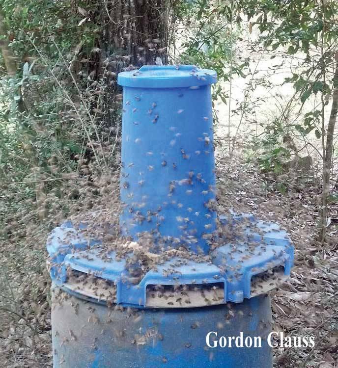 Dry Bee Pro Feeder