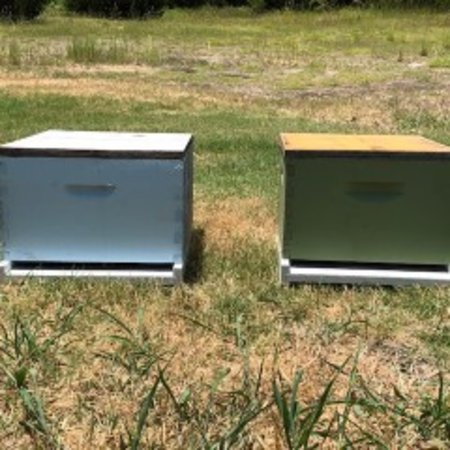 Single Hive with Used Equipment WEDNESDAY Pick-Up