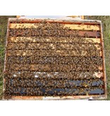 Single Hive with Used Equipment SATURDAY Pick-Up