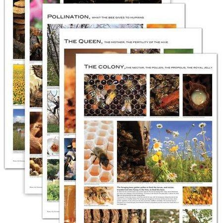 Set of 5 Beekeeping Posters
