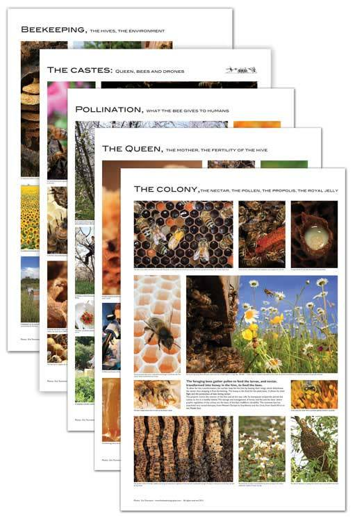 Set of 5 Beekeeping Posters