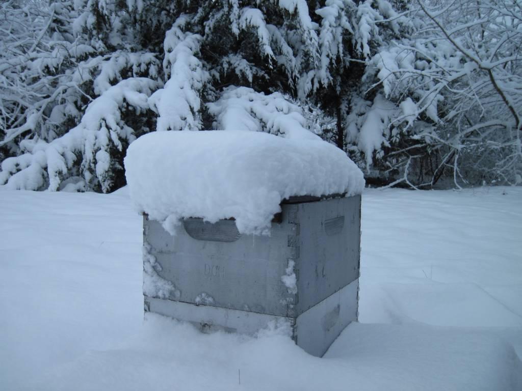 5 Essential Winter Tests to Gauge Bee Health
