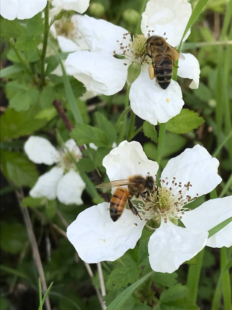Honey Bee Forage Seed Mix Planting Instructions