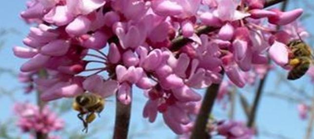 March Beekeeping Tips