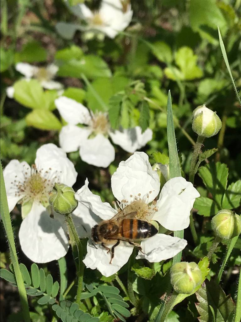 April Beekeeping Tips