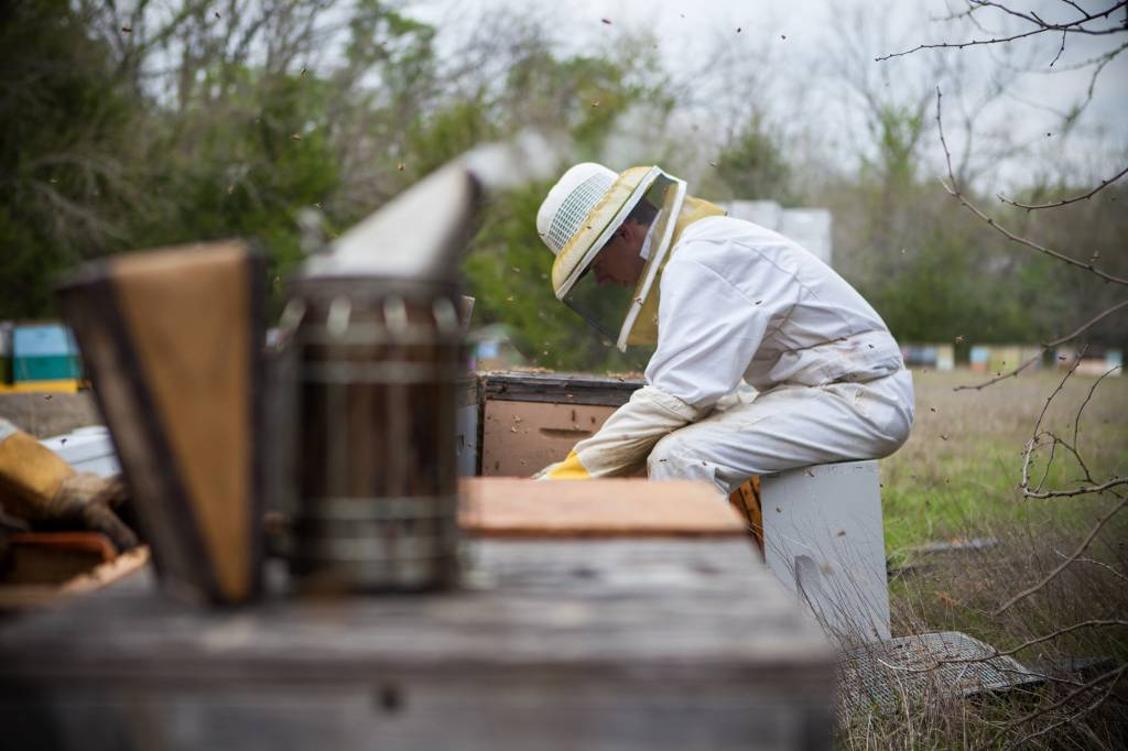 May Beekeeping Tips