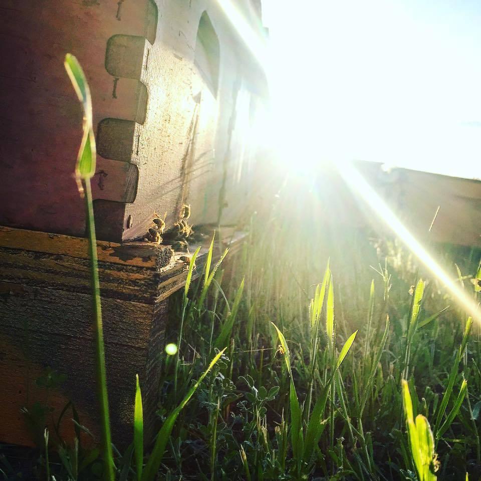 August Beekeeping Tips