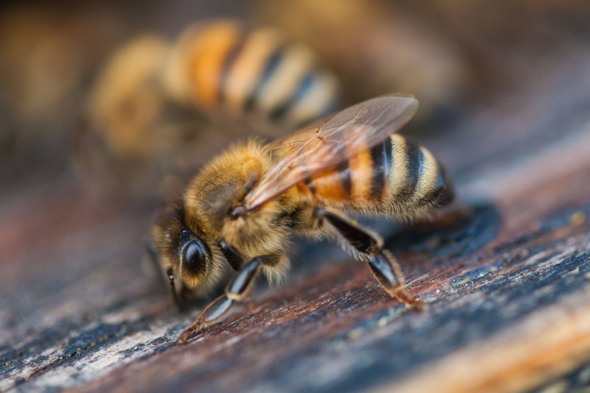 November Beekeeping Tips