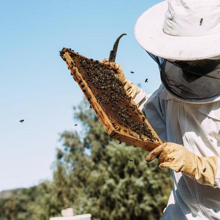 2020 Beginning Beekeeping Classes - Blue Ridge, TX
