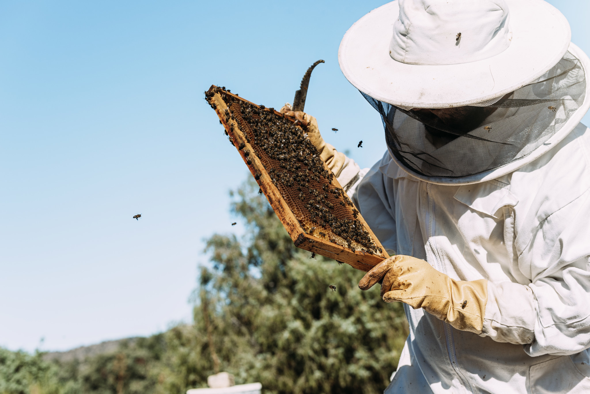 2020 Beginning Beekeeping Classes - Dayton, TX