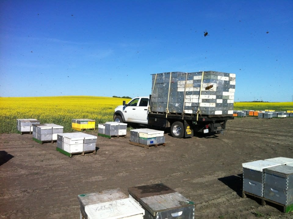 The Business of Beekeeping November 14th 2020