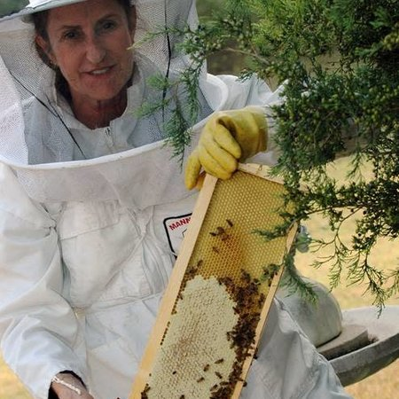 2020 Beginning Beekeeping Classes - Blue Ridge, TX