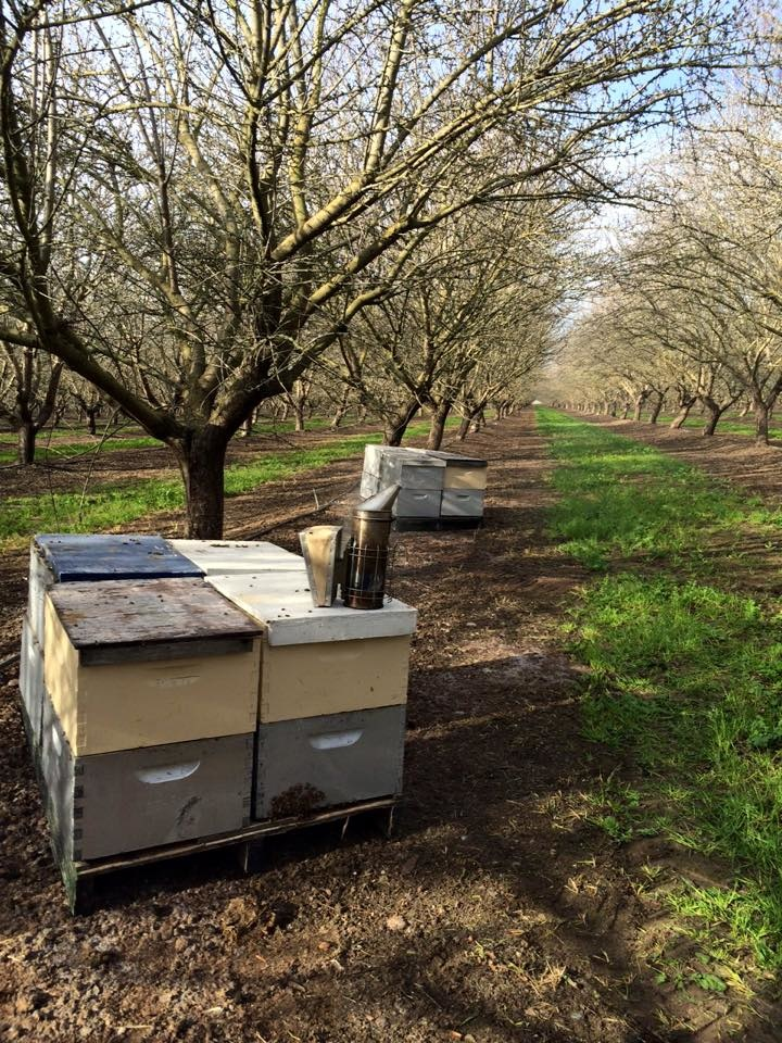 2020 February Beekeeping Tips