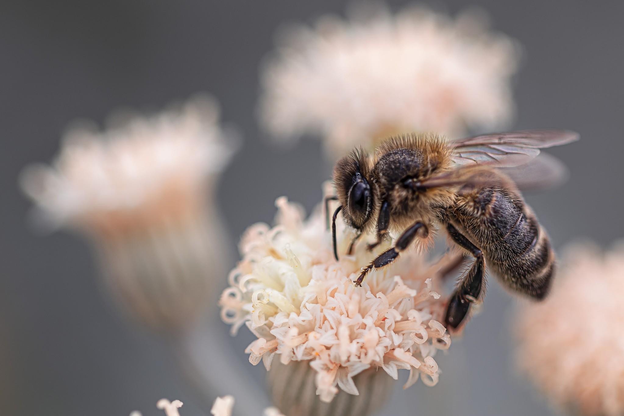 2020 March Beekeeping Tips