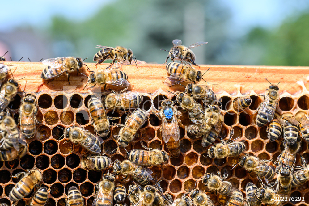 2020 April Beekeeping Tips