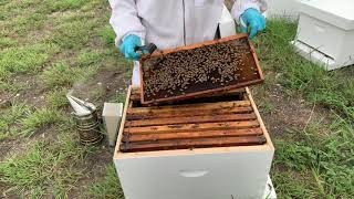 When to Re-Queen Your Hive-Video