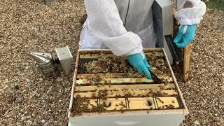 How to Install a Small Hive Beetle Trap-Video