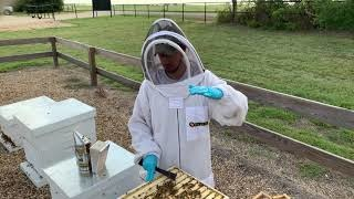 Can I Overfeed My Bees?-Video