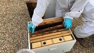 Texas Bee Supply Video - A Sad story of a hive that won't make it