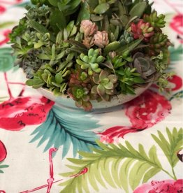 CLS Landscape Supply Small Saucer - Assorted Succulents