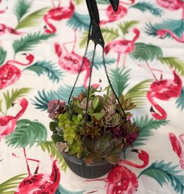 CLS Landscape Supply Small Hanging Basket - Assorted Succulents