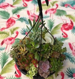 CLS Landscape Supply Large Hanging Basket - Assorted Succulents