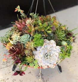 CLS Landscape Supply Flying Saucer Hanging Basket - Assorted Succulents