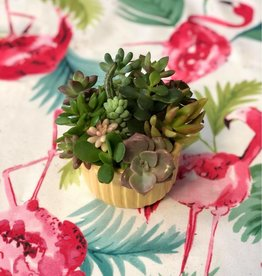CLS Landscape Supply Mini Window Pots - Assorted Succulents